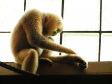 Free Sad Monkey Stock Photos - 1895053