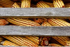 Free Organic Corn Feed  Stored For Winter Stock Photography - 1896142