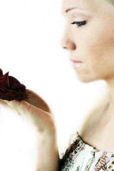 Red Rose Portrait Royalty Free Stock Photography