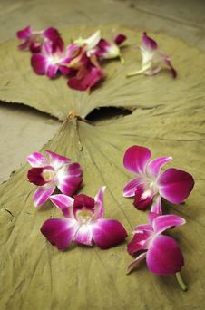 Free Orchids And Leaf Royalty Free Stock Photos - 1899988