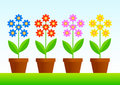 Free Flowers In Pots Royalty Free Stock Image - 18900726
