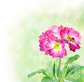 Free Floral Border Royalty Free Stock Image - 18909246