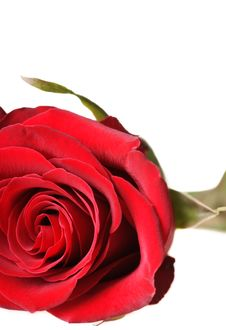 Free Red Rose Stock Photos - 18900073