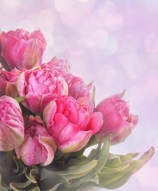 Free Pink Tulips Royalty Free Stock Photo - 18900165
