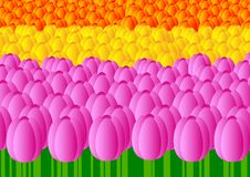 Free Bed Of Tulips Royalty Free Stock Image - 18900676