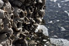 Free Giant Barnacles Stock Image - 18900991