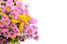 Free Flowers Royalty Free Stock Photo - 18901135