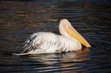 Free Pelican Stock Image - 18901391