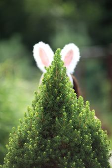 Free Rabbit Ears Royalty Free Stock Image - 18901666
