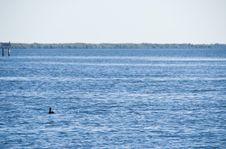 Free Blue Lagoon Royalty Free Stock Photo - 18902355
