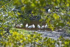 Free White Ibis Stock Image - 18902521