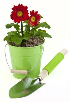 Free Spring Flower Royalty Free Stock Image - 18903176