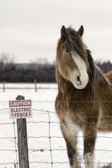 Free Horse By Electric Fence Stock Images - 18903374