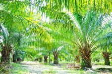 Palm Field Stock Images