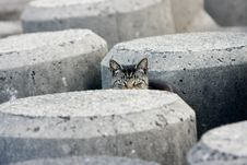 Free Peek-a-boo Stray Cat In Concrete Blocks Royalty Free Stock Images - 18907649