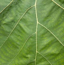 Free Texture Of Green Leave Stock Images - 18909714