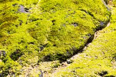Free Green Lichen On Stone Stock Images - 18910164