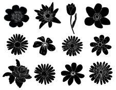 Free Flowers Set Royalty Free Stock Image - 18910736