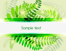 Free Green Background Royalty Free Stock Photography - 18912797