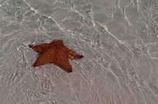 Free Red Sea Star In Cuba Royalty Free Stock Photo - 18913705