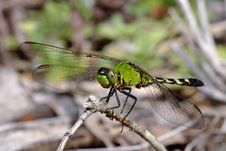 Free Dragonfly Royalty Free Stock Photo - 18913875