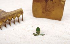 Free Single Young Plant Sprouting From Of Sand Royalty Free Stock Image - 18914496