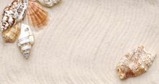 Free Seashell On Sand Stock Photo - 18914670