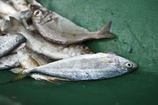 Free Fresh Fish Royalty Free Stock Photo - 18914815