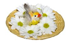 Chicken In A Nest With Flowers Royalty Free Stock Image