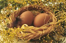 Free Easter Eggs In A Nest Royalty Free Stock Image - 18915276