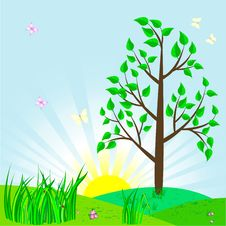 Free Tree. Royalty Free Stock Images - 18916419