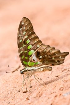 Free Butterfly Stock Images - 18916854