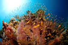 Free Vibrant Coral Reef With Lots Of Fish Royalty Free Stock Photos - 18916998