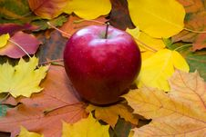 Free Apple Against Autumn Leaves Stock Photography - 18917942