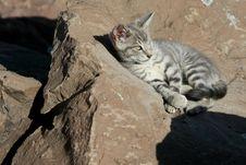 Free Wild Kitten Sunning On The Rocks Stock Photography - 18918722
