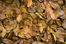 Free Blasted Leafs Stock Image - 18918731