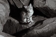Wild Kitten Sunning On The Rocks Royalty Free Stock Photography