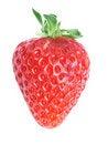 Free Single Fresh Red Strawberry Royalty Free Stock Photo - 18920635