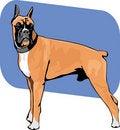 Free Boxer Dog Stock Photos - 18923693