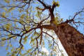 Free Green Tree Stock Image - 18924221