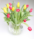 Free Yellow And Red Tulips Royalty Free Stock Photography - 18927767
