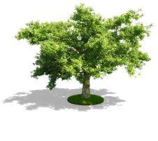 Free Green Tree Stock Image - 18920241