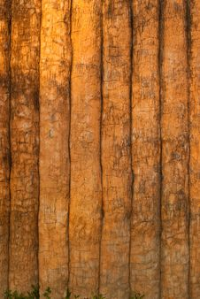 Free Cement Wood Texture. Royalty Free Stock Photography - 18921667