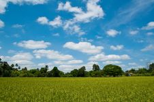 Free Rice Field And Sky Stock Photos - 18921683