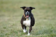 Free Dog Running Over The Field Royalty Free Stock Images - 18922379