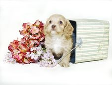 Free Cream Colored Puppy Sitting In Bucket Royalty Free Stock Images - 18922549