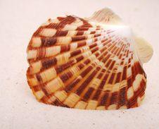 Free Seashell On Sand Royalty Free Stock Image - 18922586