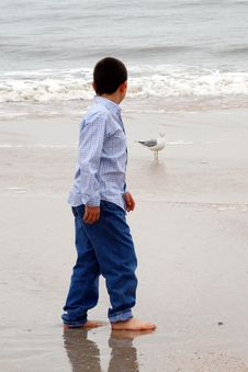 Free Boy On Beach With Seagull Stock Images - 18923404
