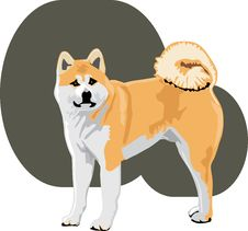 Free Akita Color Stock Images - 18923614