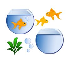 Free Gold Fish And Fish Bowl Royalty Free Stock Images - 18924959